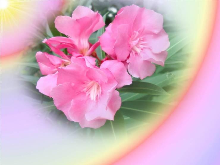 HD Spring pictures wallpaper desktop 1600p