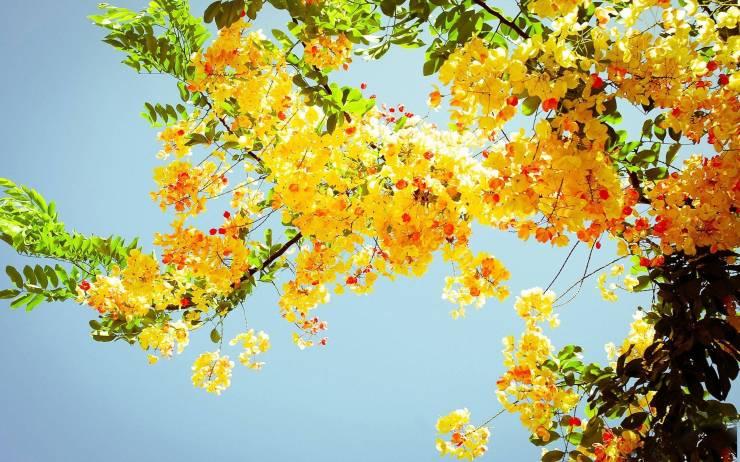 HD Summer pictures wallpaper smartphone desktop 2560p
