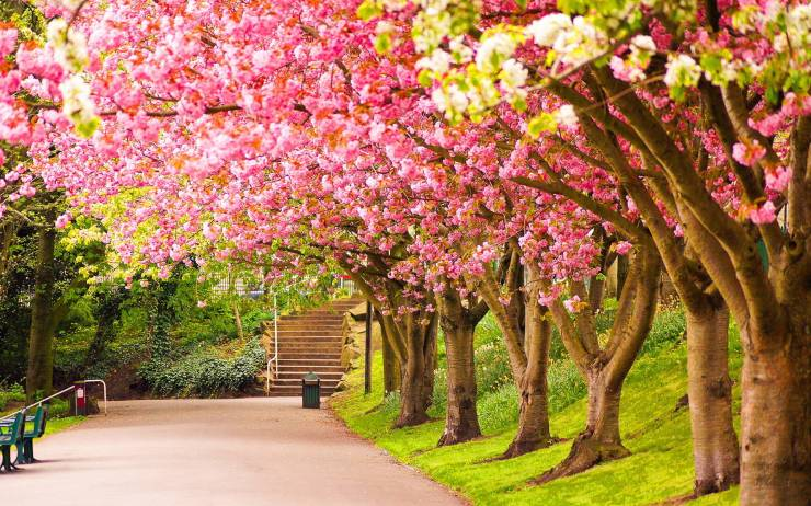 HD Wallpaper nature spring android, Pc Desktop 1920p