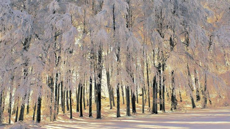 HD Winter forest wallpaper android, Pc Desktop 1920p