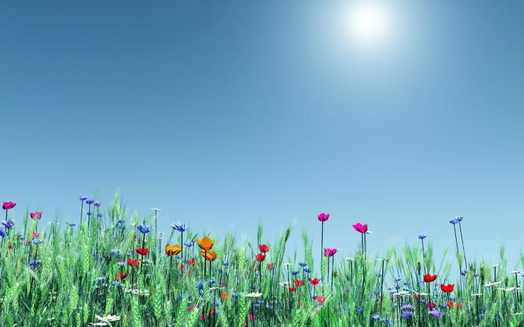 Spring backgrounds windows desktop 1920p
