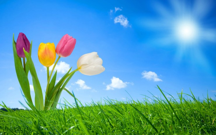 Spring desktop backgrounds windows desktop 1920p