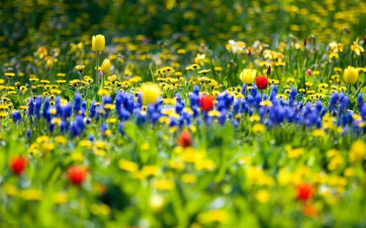 Spring desktop photos windows desktop 1920p