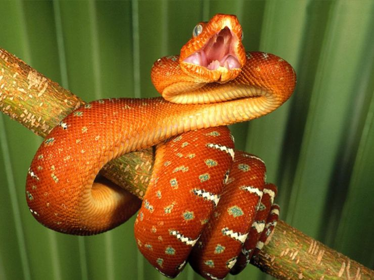 dangerous images of snakes
