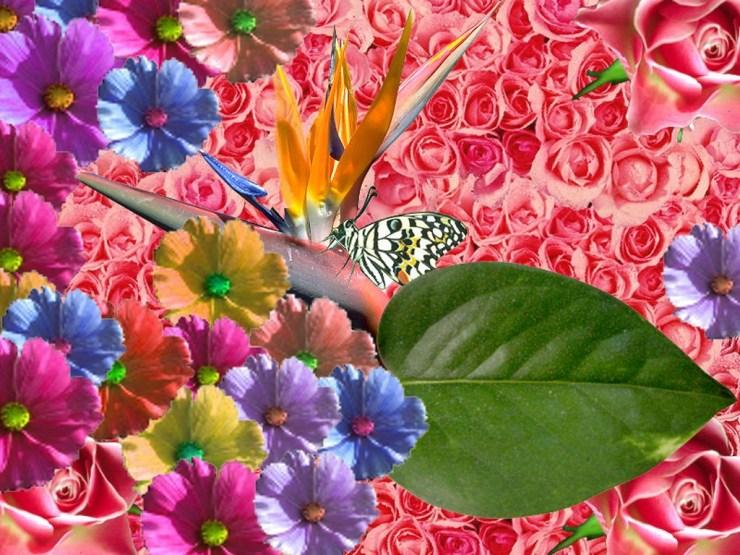 desktop wallpaper springtime