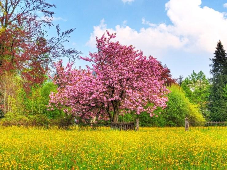 free spring desktop wallpaper downloads