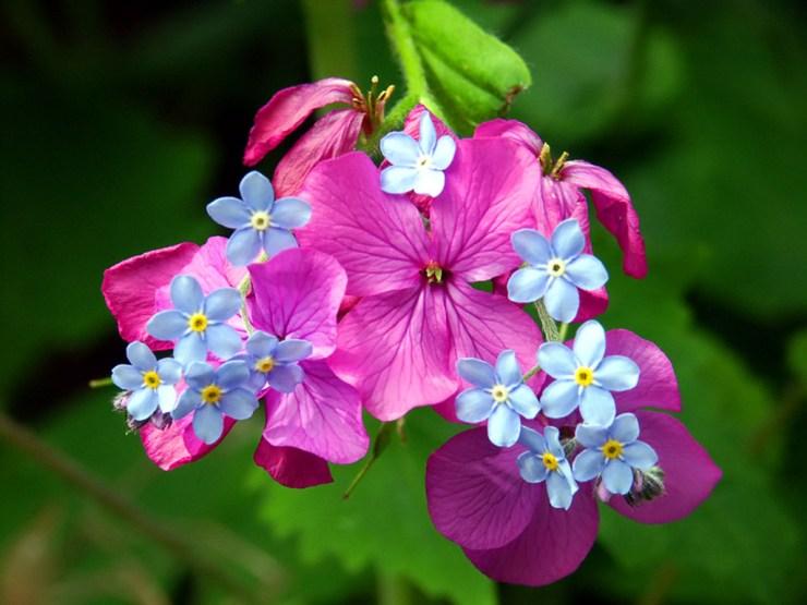 free spring flower wallpaper