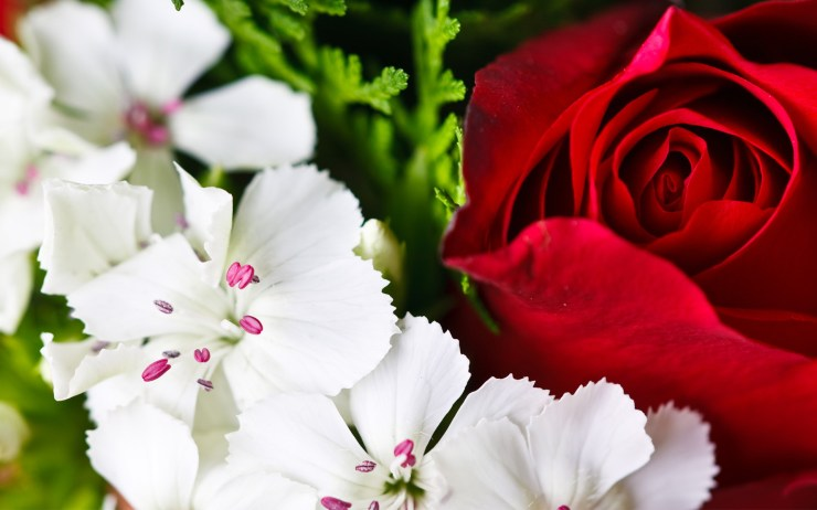 hd beautiful flowers wallpapers