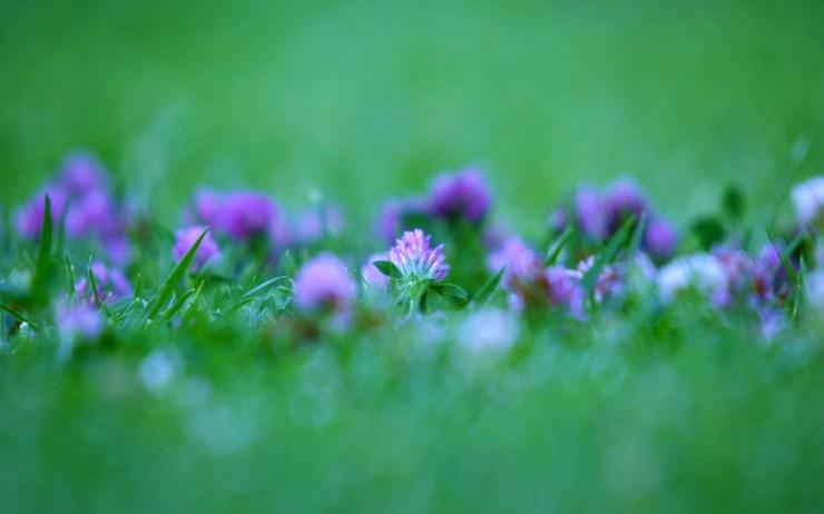 Purple flowers in a backyard in Madrid, Spain