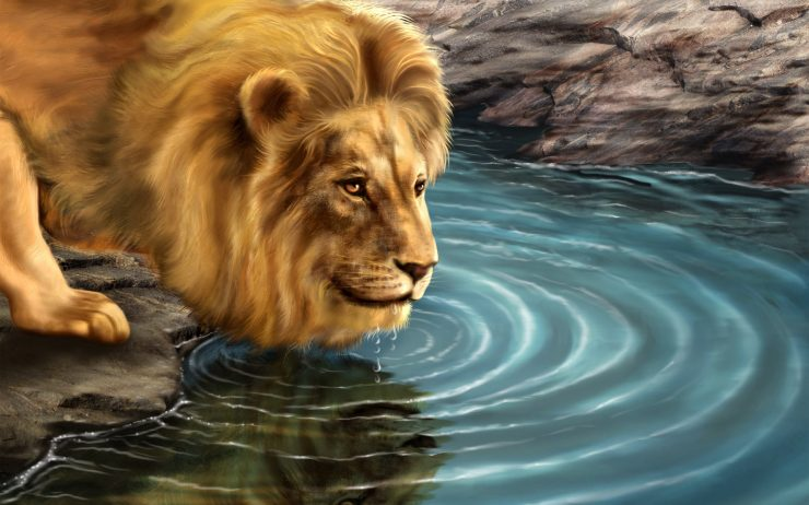 lion wallpaper download free