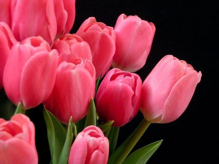 most beautiful flowers wallpapers