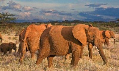photo of an elephant