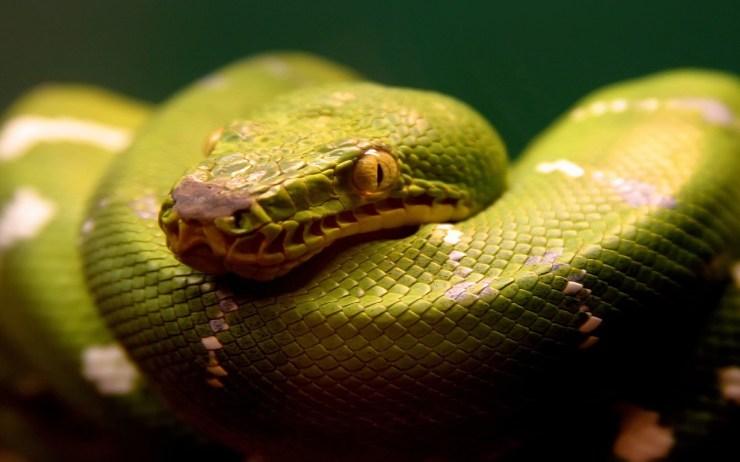 photos of a snake