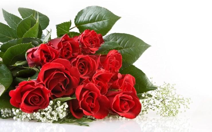 rose flower wallpaper download