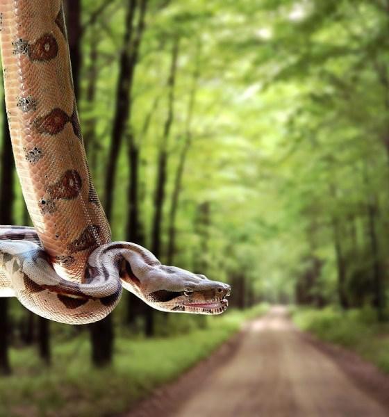 wallpaper of snakes