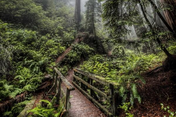 deep forest wallpaper - HD Desktop Wallpapers | 4k HD