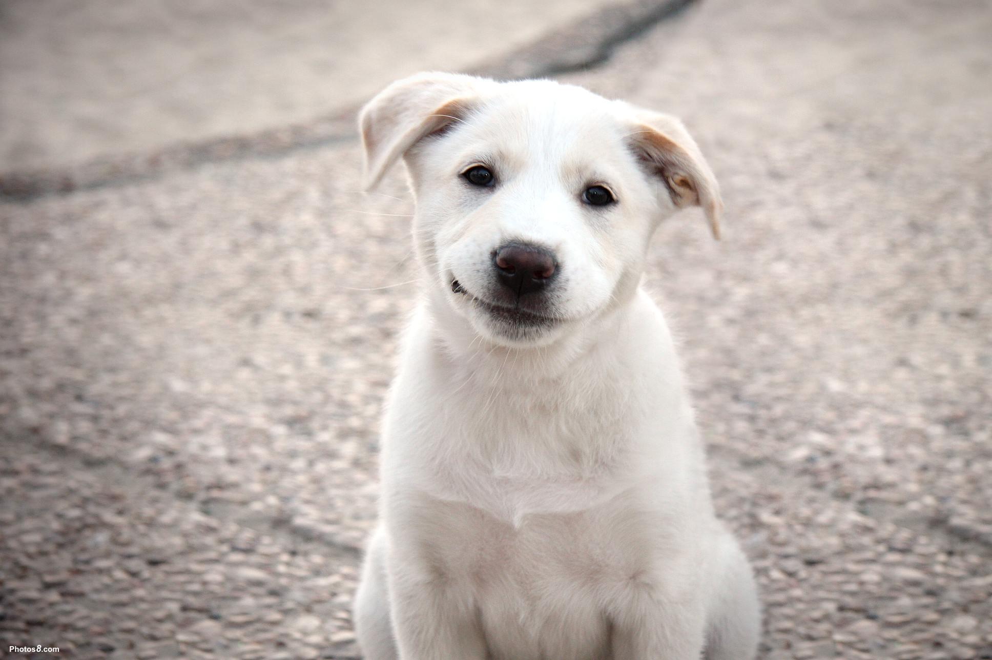 dog photos free download - hd desktop wallpapers | 4k hd