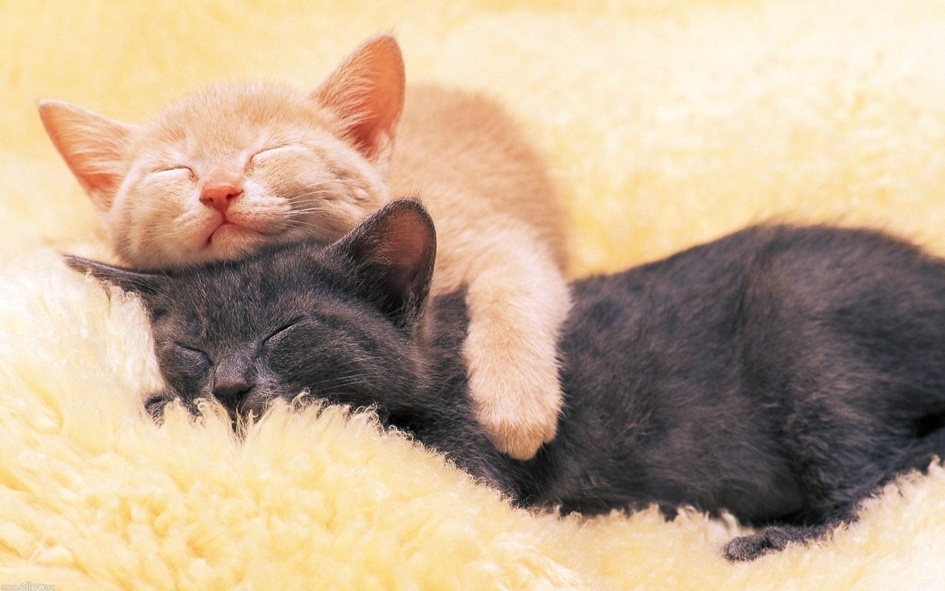 Sleeping Cats HD Desktop Wallpapers 4k HD
