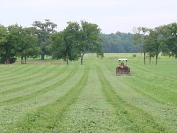 cutting-hay