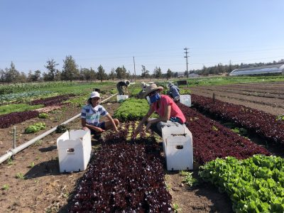 gleaning-sungrounded_2020b