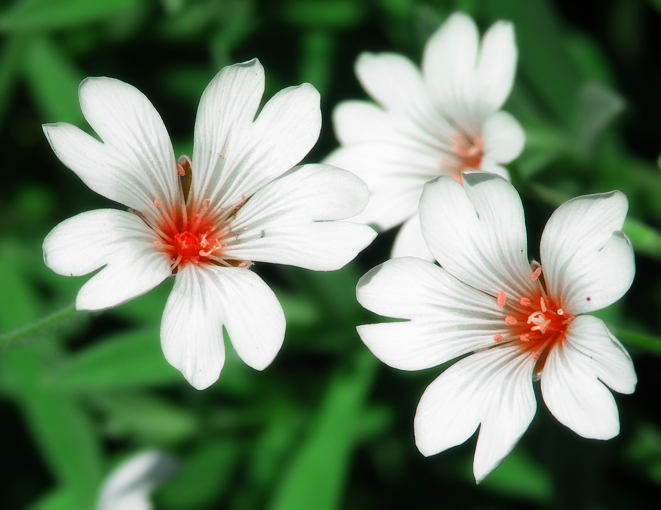 Names Of White Flowers 15 Cool Hd Wallpaper