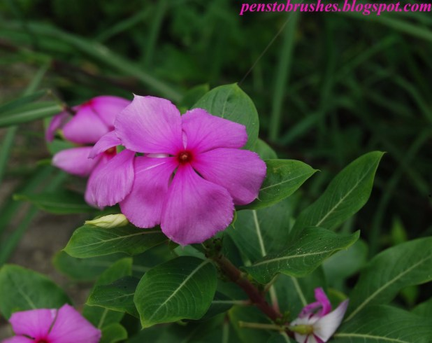 Pink flowers images with names allofthepicts pink flowers names 37 free hd wallpaper hdflowerwallpaper com mightylinksfo