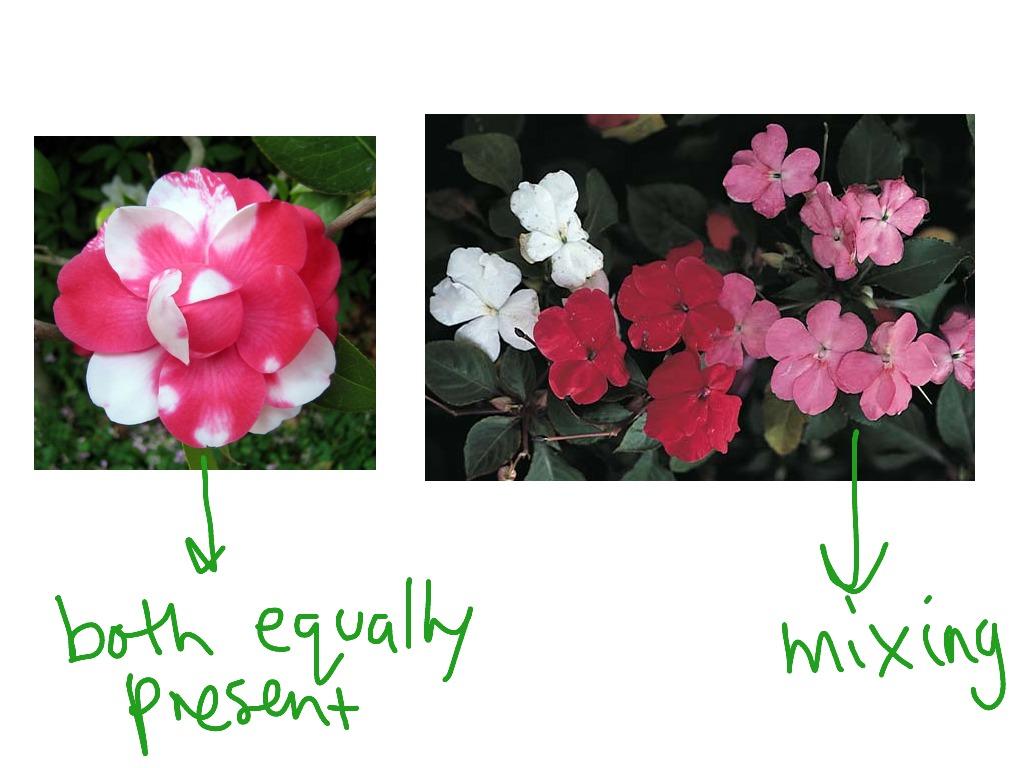 Pink Flowers Codominance 6 Cool Hd Wallpaper