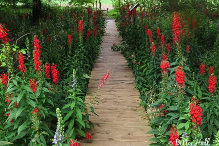 Flower shop near me cardinal flower perennial flower shop cardinal flower perennial the flowers are very beautiful here we provide a collections of various pictures of beautiful flowers charming mightylinksfo