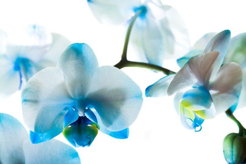 White wallpaper with blue flowers doeloe1st white wallpaper with blue flowers 15 widescreen mightylinksfo