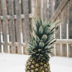 Get your choice pineapple wallpapers