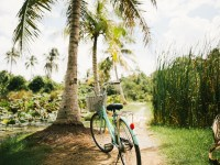 bicycle palm trees tropics 1920x1080