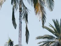 palm hd tree with different style