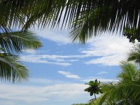 palm trees sky branches green azure background 1920x1080
