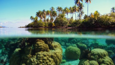 palm trees the island under water corals reeves azure 1920x1080