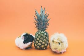 pineapple wallpapers with cool background