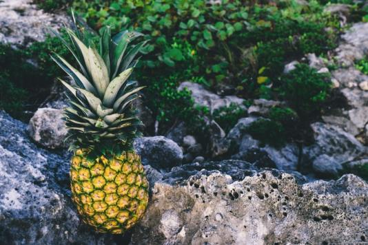 pineapple wallpapers with green background hd