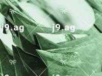Latest-Eid-Mehendi-Design-1031x1289