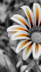 Flower-wallpaper-for-android_375x667