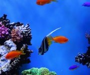 color fishes in see hd android images_180x320