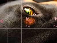 rose mehndi designs for kids hand