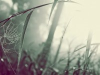 snow android hd image for mobile_470x294