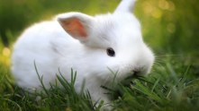 white animal on green surface mobile iphone wallpapers_768x432