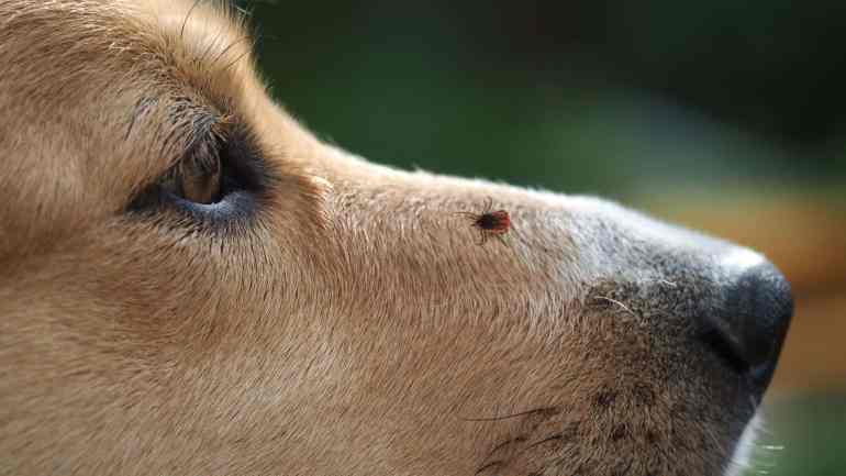 How to Check for Ticks by yourself in 4 Steps (7)