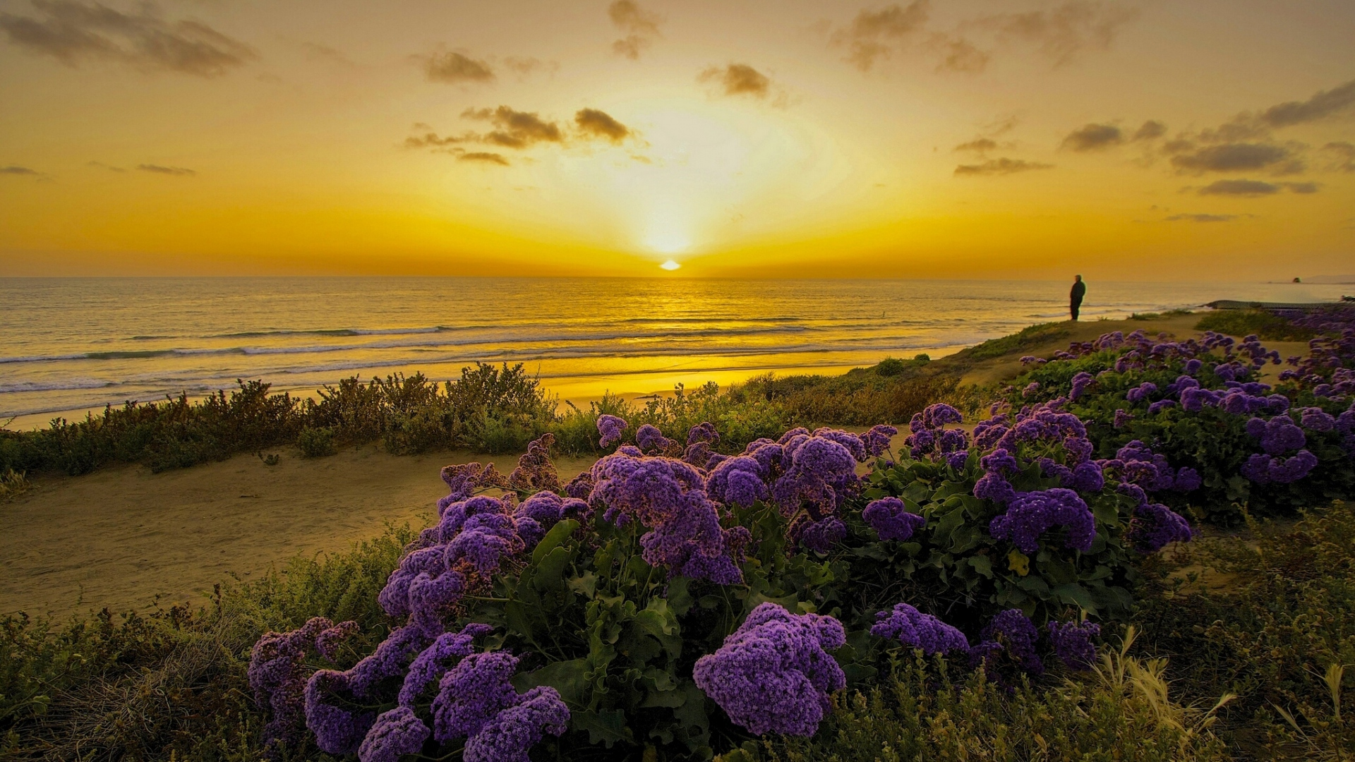 HD Hintergrundbilder Strand Blume Busch Pazifik