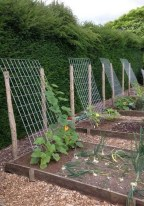 32 Successful Ways To Building DIY Trellis For Veggies And Fruits HomeDesignInspired 26