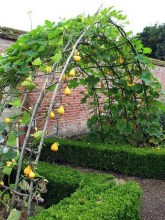 32 Successful Ways To Building DIY Trellis For Veggies And Fruits HomeDesignInspired 4