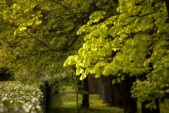botanicalgarden5m.vrdoljak