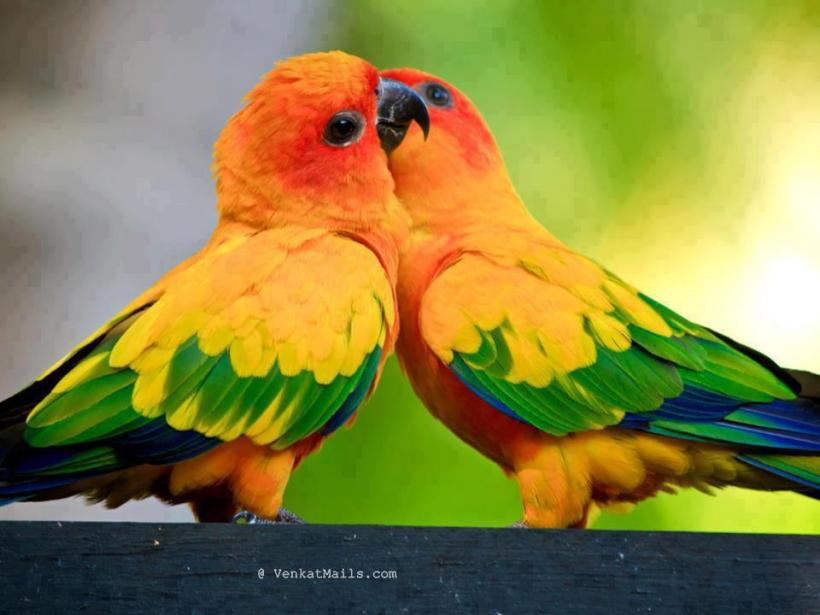 Good Morning Beautiful Birds Hd Images Good Morning Beautiful Birds