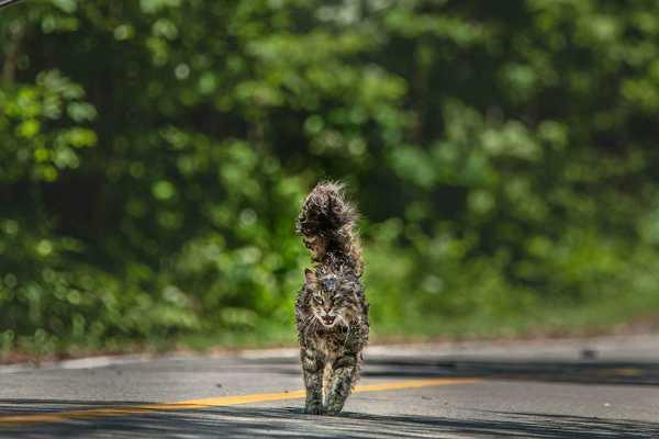 Pet Sematary Full Movie Download