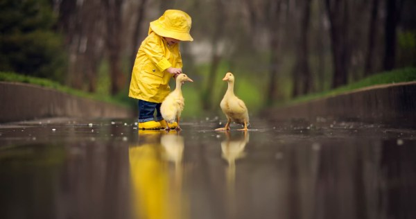 Little Boy Child Playing With Ducks, HD Cute, 4k ...